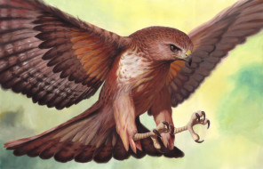 полет, охота, орел