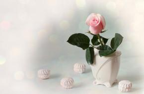 еда, конфеты,  шоколад,  сладости, ваза, зефир, розовый, бутон, роза