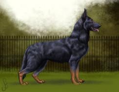 рисованное, животные,  собаки, фон, взгляд, собака