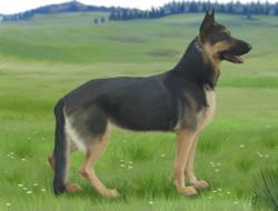 рисованное, животные,  собаки, фон, взгляд, собаки, луг