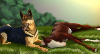 рисованное, животные, луг, лошадка, собака