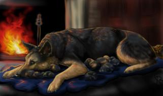 рисованное, животные,  собаки, камин, взгляд, собака