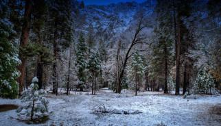обои для рабочего стола 2048x1173 природа, зима, снег, ели